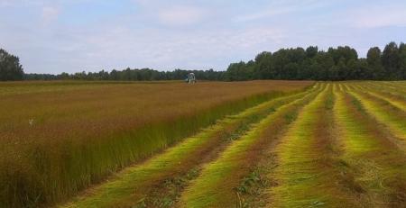 Уборка урожая на Русском Льне